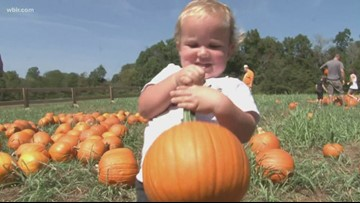 It finally feels like fall! Here are East TN's corn mazes, pumpkin patches & haunted attractions