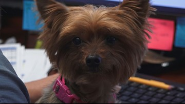 Dog-Friendly Company calls Maryville home