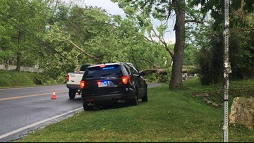 Over 1,000 people lost power after a tree fell onto a road last night