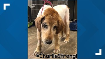 Pupdate: Charlie continues to recover at new primary vet