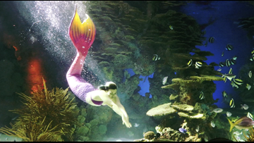 Uncovering the magic of Smoky Mountain mermaids