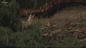 10Listens: Project threatens historic tree