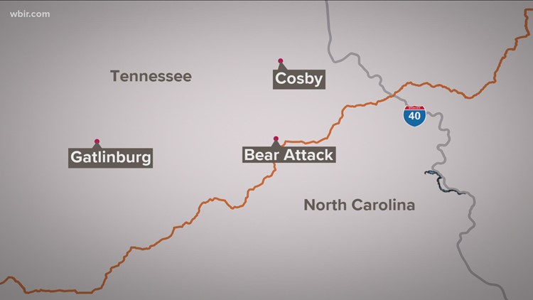 Bear euthanized after attacking teen in Great Smoky Mountains National Park