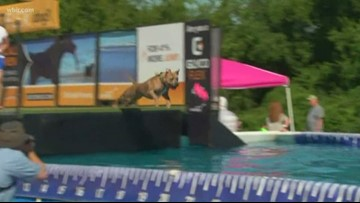Pooches are plunging in a pool at a Farragut shopping center