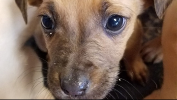Kentucky rescue seeks help after dozens of dogs found abandoned