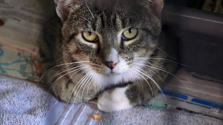 Cat Face Rescued from Hoarder Cocke County Newport 4