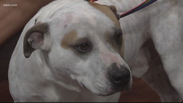 Pet of the Week: Zazu