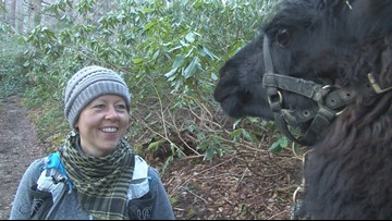 Buddy Check 10: Breast cancer survivor is LeConte llama wrangler, UT Medical Center nurse
