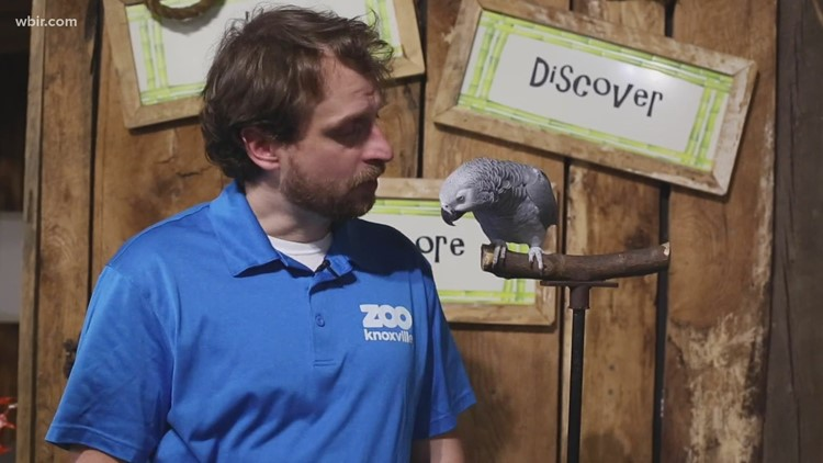 Einstein the Parrot encourages donating blood