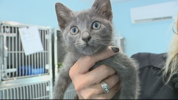 Kitten rescued from the middle of the interstate in Anderson County