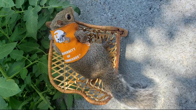 Sinan the Squirrel