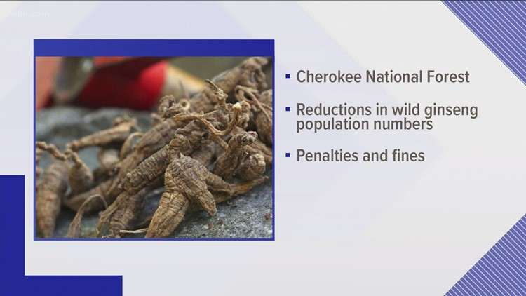 U.S. Forestry officials put a pause on issuing ginseng collection permits due to wild decline