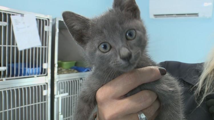 kitten rescue in anderosn county