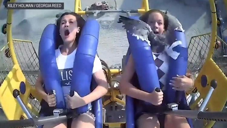 Duck! Seagull flies into teen's face as she's riding a Jersey Shore amusement park ride