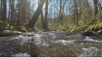 Smokies rangers: Moving rocks affects salamander habitats in park