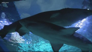 Ripley's Aquarium in Gatlinburg to serve as a home base for all-new NBC show 'Earth Odyssey'