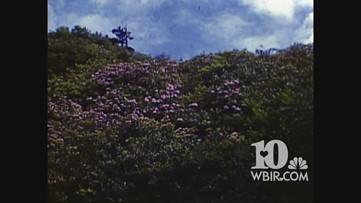 Video Extra: Full 1939 Smokies footage by Granville Hunt