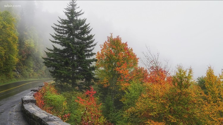 Fall foliage is making its way to East TN!