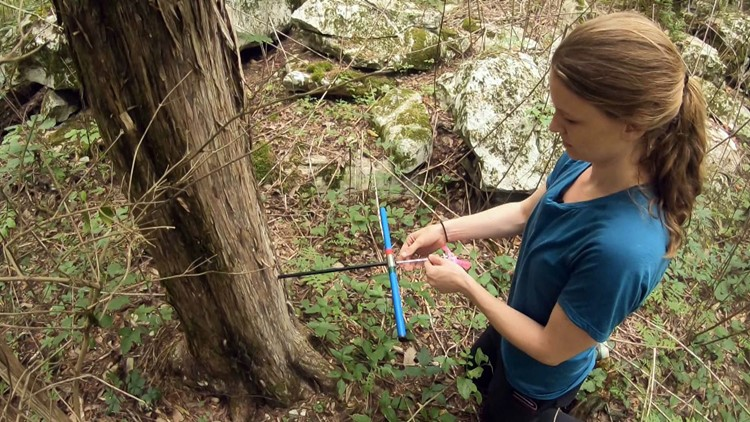 Laura Smith tree ring cedar extraction Chattanooga climate research TVA University Tennessee