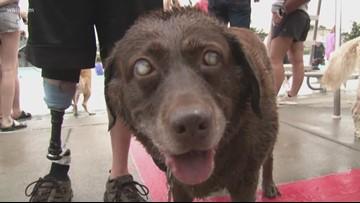 Oak Ridge hosts puppy pool party