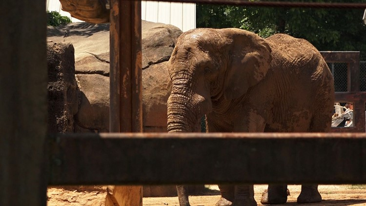 Elephant at Zoo Knoxville.