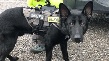 Meet Kato, the search and rescue K-9 of the Smokies