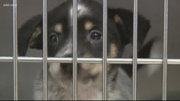 Help a pet find a fur-ever home during Clear The Shelters