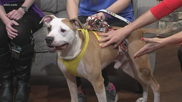 Young-Williams Animal Center introduces us to Gustav who is up for adoption!