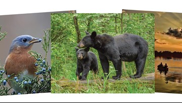 Tennessee Wildlife Resources Agency accepting entries for 2019-2020 annual calendar