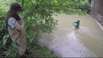 Bacteria, pollutants found in East TN waterways