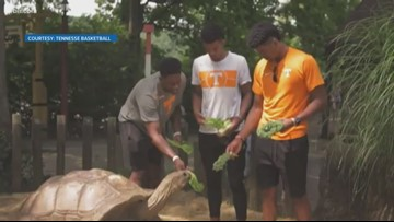 Vols basketball goes to the zoo