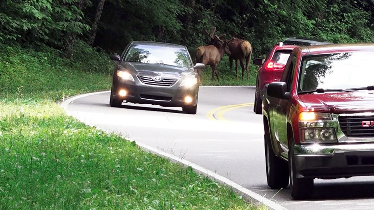 03 Elk Newfound Gap Road Tennessee Great Smoky Mountains National Park 2019
