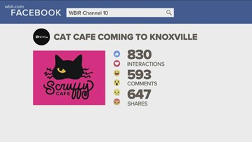 10Listens: What is a cat cafe?
