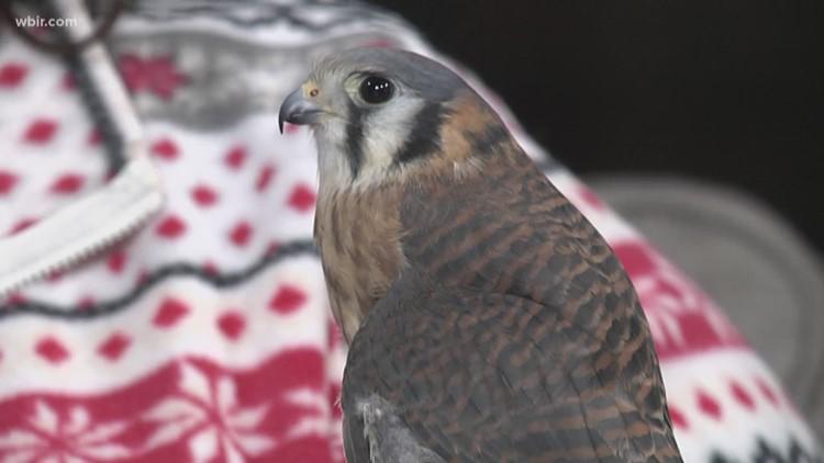 Ijams Nature Center to host Tennessee Naturalist program