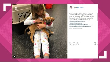 P!NK adopts puppy while in Nashville for concert