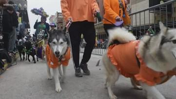 Enjoy some dog-gone fun at Mardi Growl