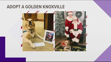 Pup gives back to Adopt A Golden
