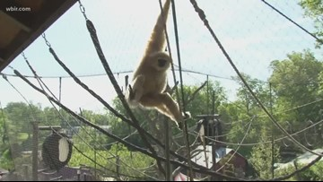 Get wild and sample exotic wine at Zoo Knoxville's WildVine safari!