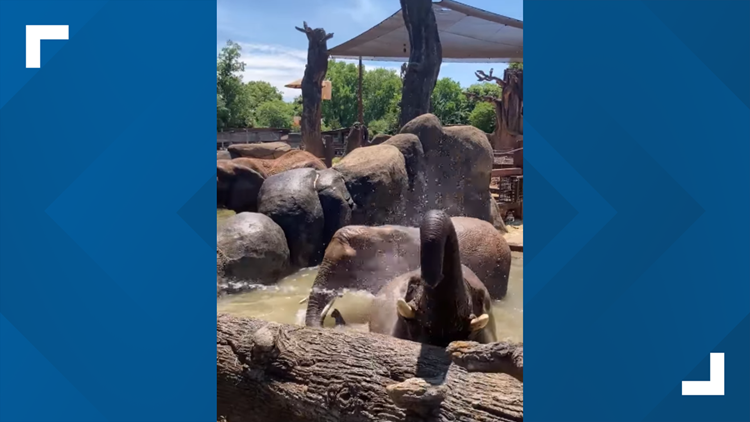 Friday is spa day   Zoo Knoxville gives African elephants a chance to cool down in hot weather