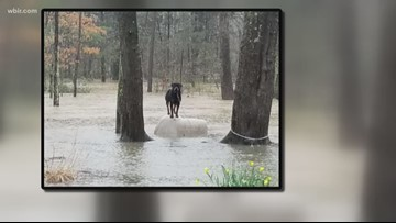 Animal Control officers urge pet owners to keep them indoors