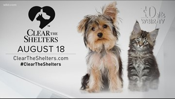 Pet of the Week August 11th, 2018