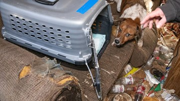 Animal Rescue Corps rescues 54 animals from desperate living situation in West Tennessee