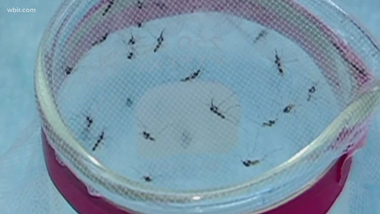 Mosquitoes return to East Tennessee despite low temps