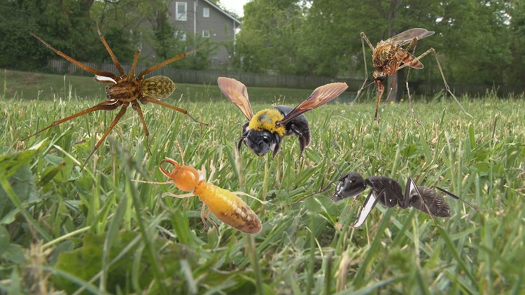 Cicadas, mosquitoes and ticks, oh my! | Pests to expect this spring