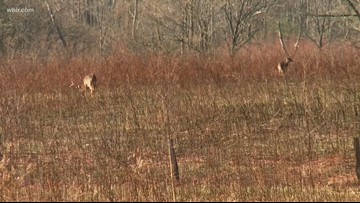Crockett, Gibson counties declared high-risk for chronic wasting disease