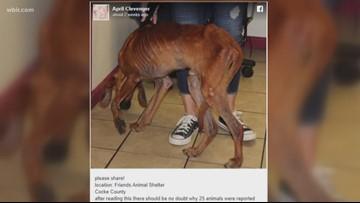 'Friends Animal Shelter' manager arrested, fired after images of starving dog flood social media