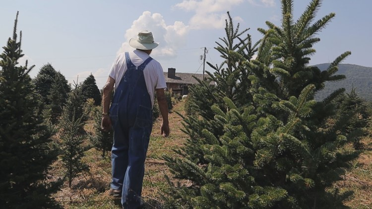 'This is what keeps us alive': Christmas tree farms evolve to meet changing demand | wbir.com