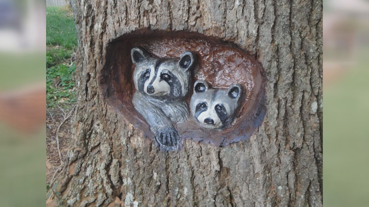 Raccoons in tree by Jeff Banning