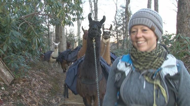 Chrissy leading llamas