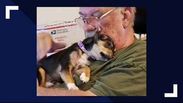 'Hope's story is miraculous': Rescued Cocke Co. puppy covered in burns 'thriving' in new home